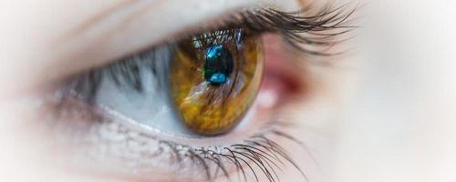 Una protezione per la retina arriva dalla Gynostemma