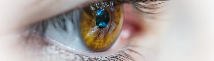 A protection for the retina comes from the Gynostemma