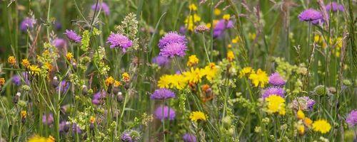 Coronavirus, asma e allergia ai pollini