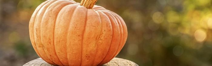Pumpkin, which one to choose? Here are the properties of the different types