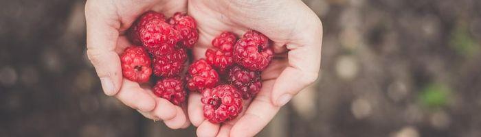 From raspberries an aid against diabetes