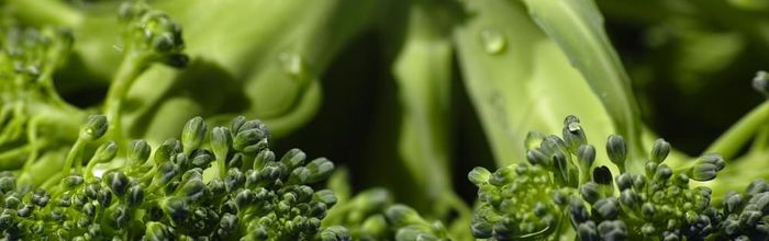 Vitamin K to live longer