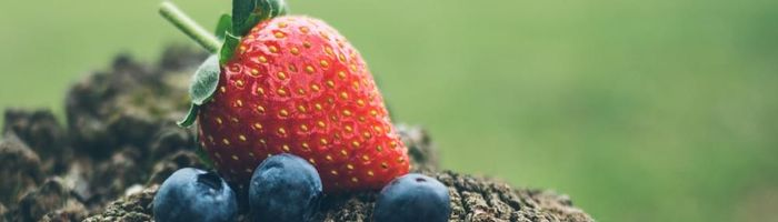 Berries and their neuroprotective action