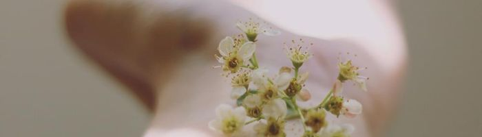 Skin inflammations? Potentilla may be a good help