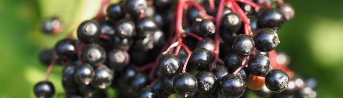 Elderberry juice and … goodbye flu!