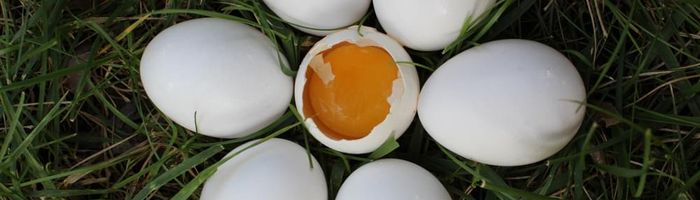 Eating eggs is so bad? Science says no