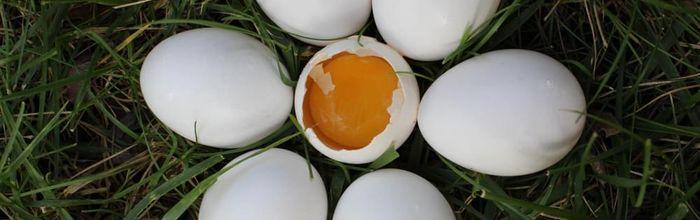 Le uova fanno così male come si crede? No, dice la scienza