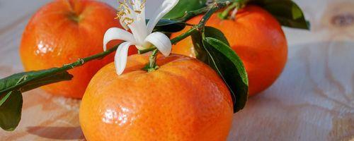 Olio essenziale di mandarino e la sua azione sull'attenzione e sul sonno