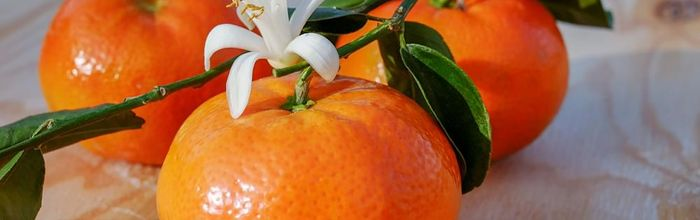 Mandarin essential oil and its action on attention and sleep