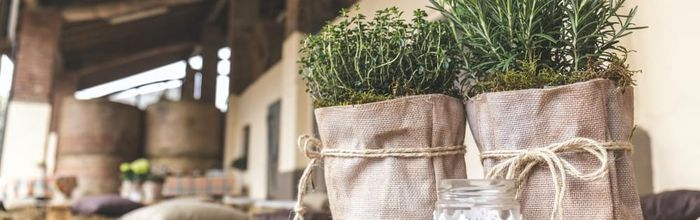 Rosemary tea helps lower blood sugar