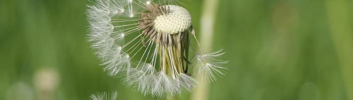 Turmeric against seasonal allergies