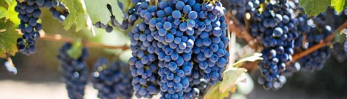 Grapes against inflammation and for heart health