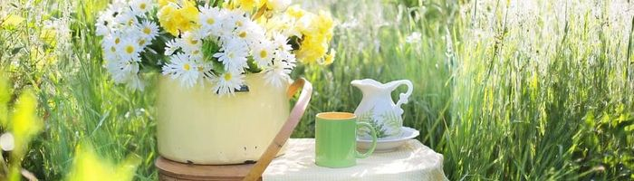 How green tea fights cancer, researchers have figured out the mechanism behind it