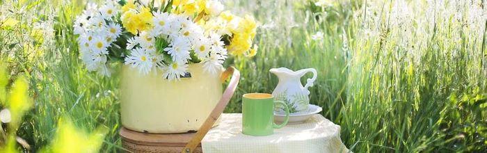 Come il tè verde contrasta i tumori, i ricercatori hanno capito il meccanismo alla base