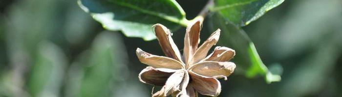 Slow Cosmetique, il legno di Panama