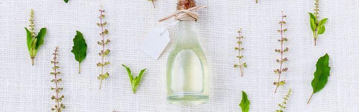 Tea tree and thyme essential oils help against antibiotic-resistant cystitis