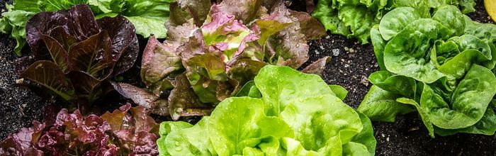 A substance found in leafy green vegetables protects the health of the gut microbiota