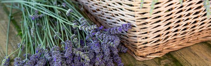 Lavender essential oil, the essence of good night