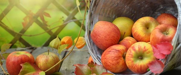 Three apples a day counteract inflammation