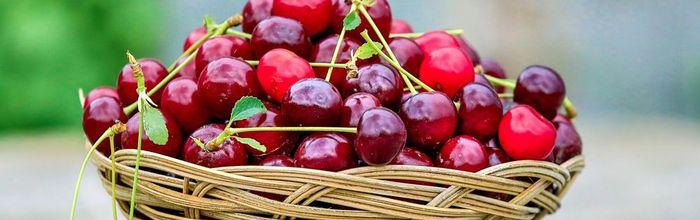 Cherries, the fruits of health sacred to Venus