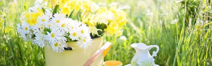 Rinforza il sistema immunitario con il tè verde