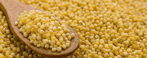 Rispenhirse, das wiederentdeckte Getreide