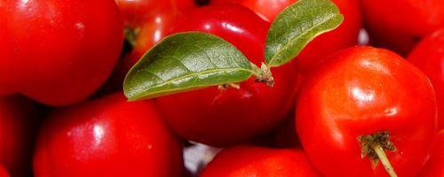 Acerola, la ciliegia delle Antille ricca di vitamina C