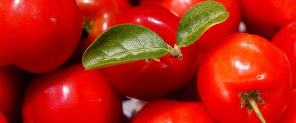 Acerola cherry, a superfood rich in vitamin C