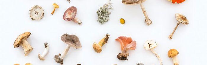 Funghi, il dono del bosco per la nostra salute