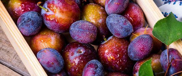 Prugne, il frutto che supporta cervello, cuore e ossa