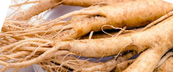 Protect your bones against osteoporosis with ginseng