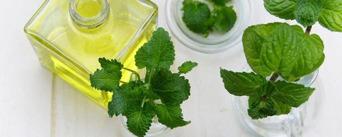 Essential oil of mint and eucalyptus, the essential oils against the heat