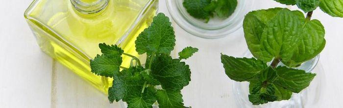 Olio essenziale di menta ed eucalipto, gli oli essenziali contro il caldo