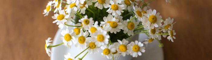 Chamomile floral water, gold for your beauty