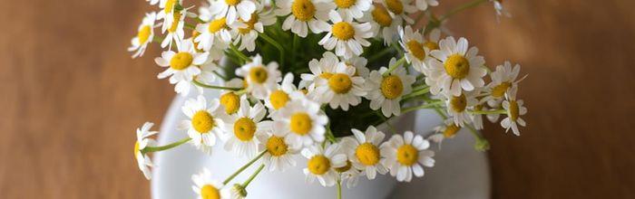 Acqua floreale di camomilla, oro per la tua bellezza