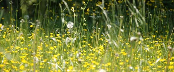 Allergie di stagione, i migliori rimedi naturali