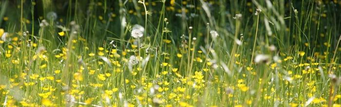 Seasonal allergies, the best natural remedies