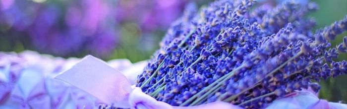 Natural cosmetics, like kings and queens Part 40, the lavender that made Julius Caesar fall in love