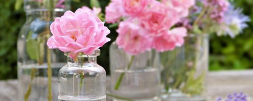 Slow cosmetique, the best plant based oils against dark skin spots