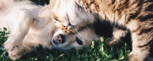 Entzündungshemmende Lebensweise Teil 5, Freundschaft und Liebe für ein gesundes Gehirn