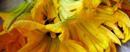 Gefüllte Zucchini Blumen italienischen Stil