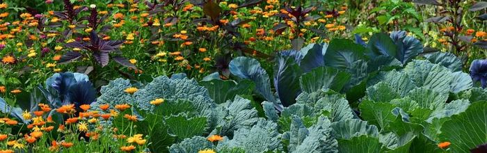 Orto e giardino, salute e relax Parte 2, timo, lattuga, rucola e viole