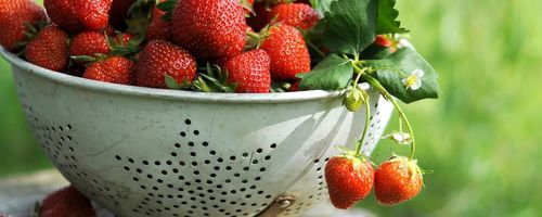Strawberries, the fruits of health