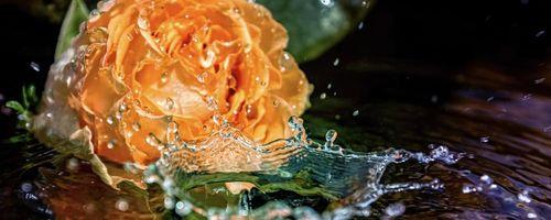 Acqua floreali, l'essenza delle piante sulla pelle