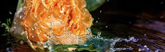 Floral waters, the essence of plants on the skin