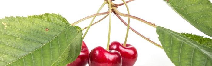 Cherries, stones and stems