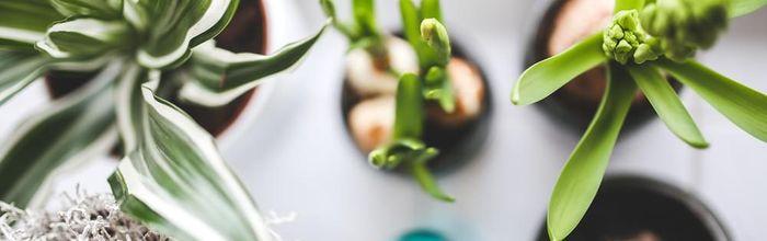 Piante antinquinamento da vaso e da giardino, nuove frontiere