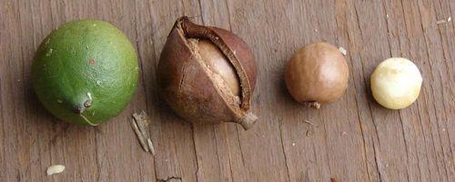 Olio di noci di macadamia