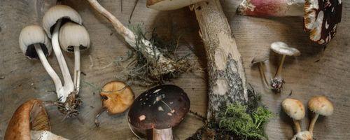 Combinazioni alimentari e metodi di cottura, i funghi