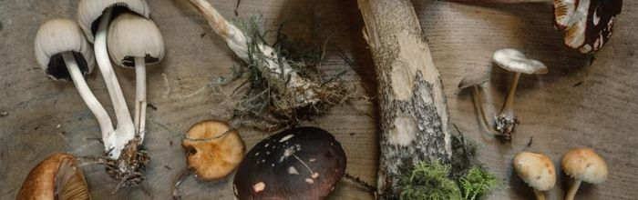 Food combinations and cooking methods, the mushrooms